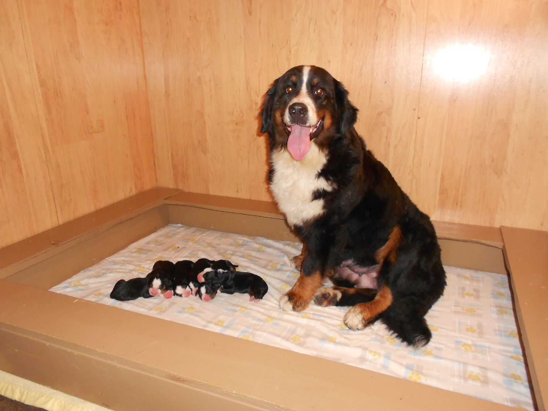 Ursanne D'Imier with pups